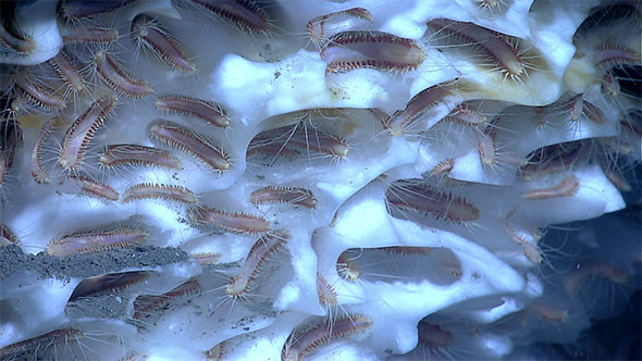 ice-worms-590.jpg